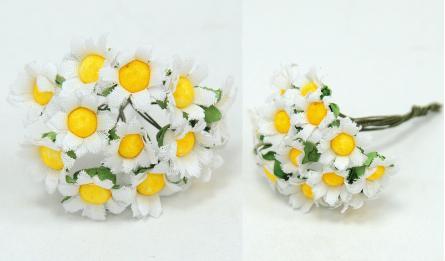 λουλούδια μαργαρίτα μίνι